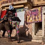 2018_02_Индия - родина слонов (Амер)