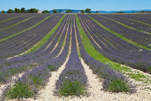 Provence, France by Eugene Osminkin