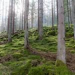 Schwarzwald, Germany