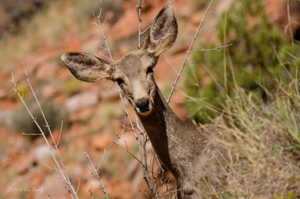 2016-10-03 019 Zion NP by Ken Everly
