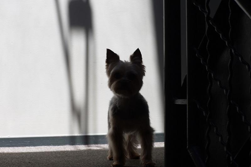 Fresh Cut Puppies - 04