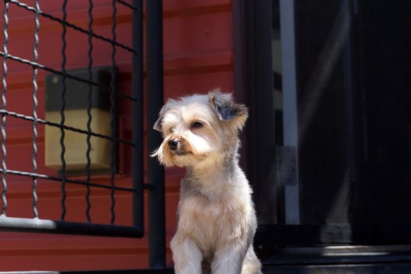Fresh Cut Puppies - 57