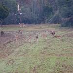 2013 Hunting