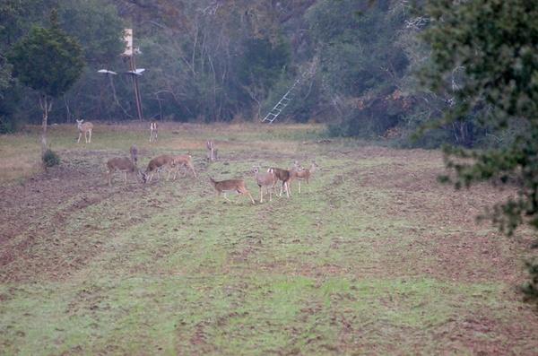 2013 Hunting by DennisRedding by DennisRedding