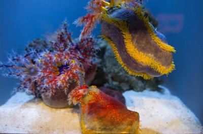 Aquarium LB