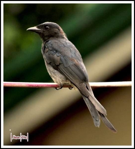 Flickr_Bird