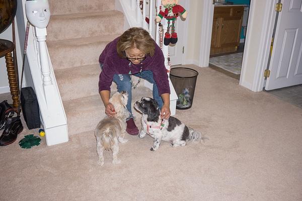 Jo & Doggies 2 by jimsimp3