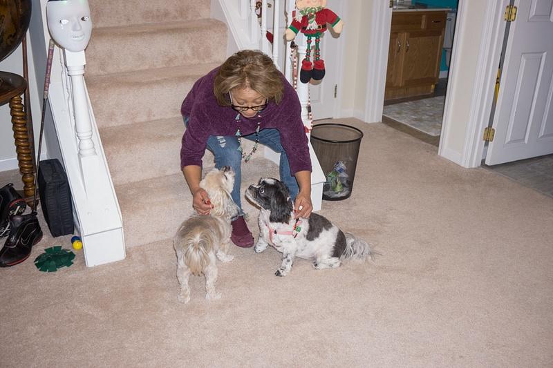 Jo & Doggies 2