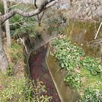 Hiroshima Mitaki shrine and hiking trail