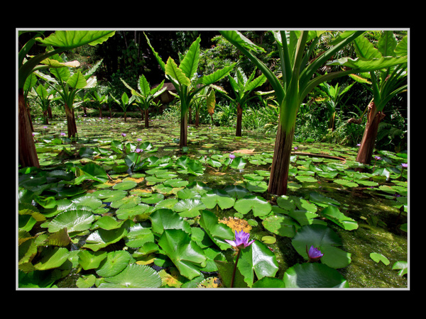 Seychelles_2013_Picks-14 by AnthonyMorley