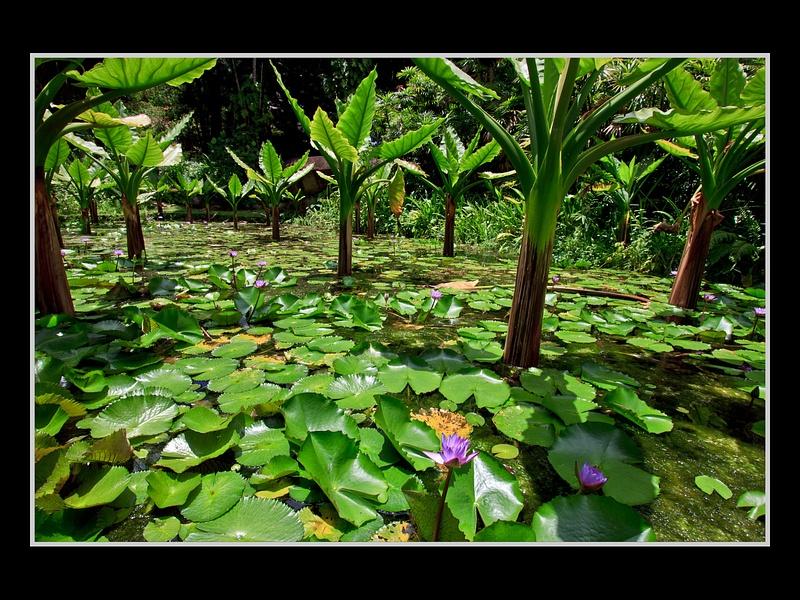 Seychelles_2013_Picks-14