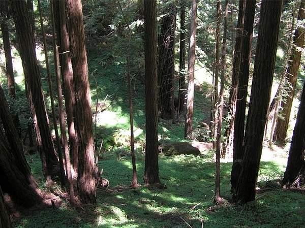 Wilder Redwoods