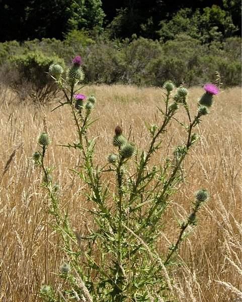 Wilder Wild Flowers
