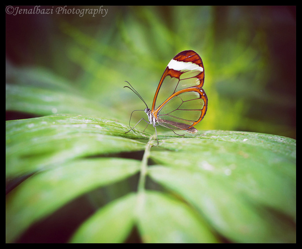 Butterfly World by JenaAlbazi