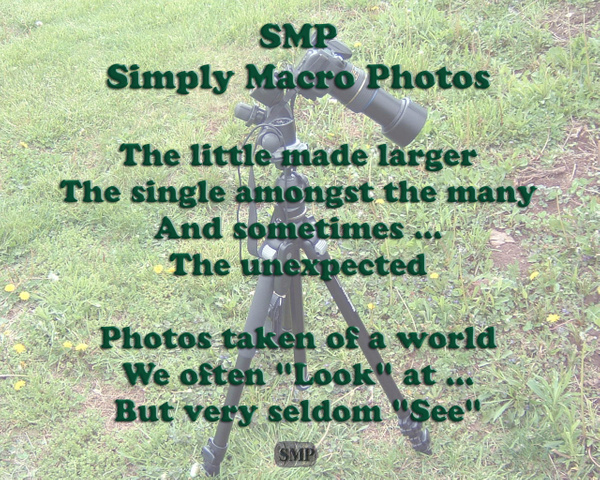 SMP-0001_Intro by StevePettit