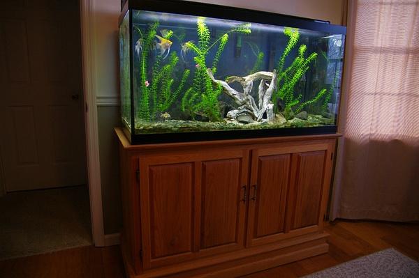 Aquarium by StevePettit