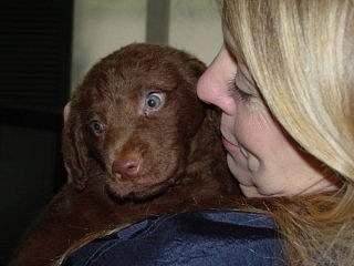 Puppy_001