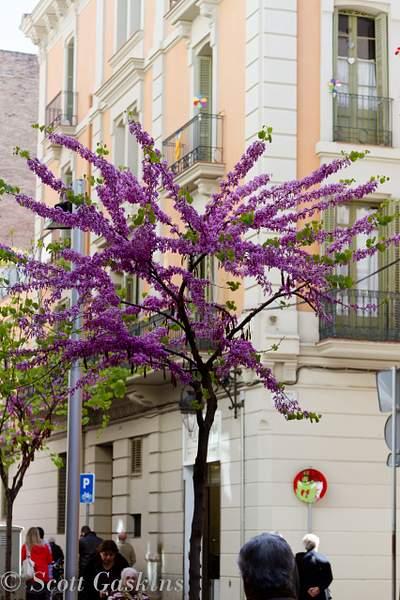 Barcelona_2012_142