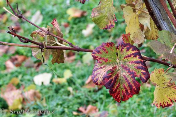 Schaffhausen_Nov_2012_032