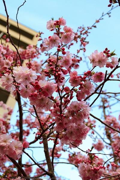 Springtime by Donut00