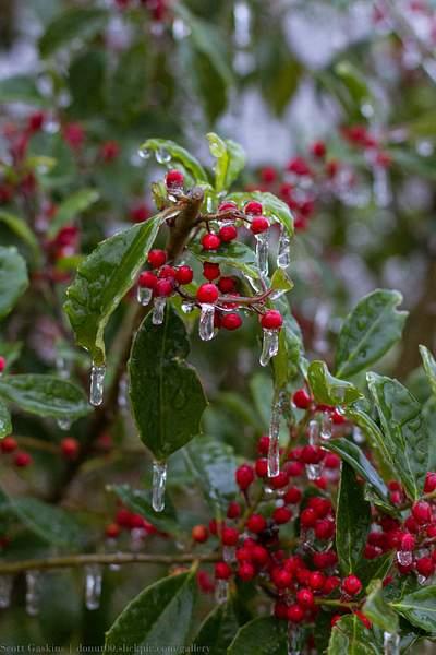 Frozen wonderland 022-5