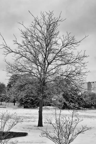 First snow in Texas 023-Edit-17