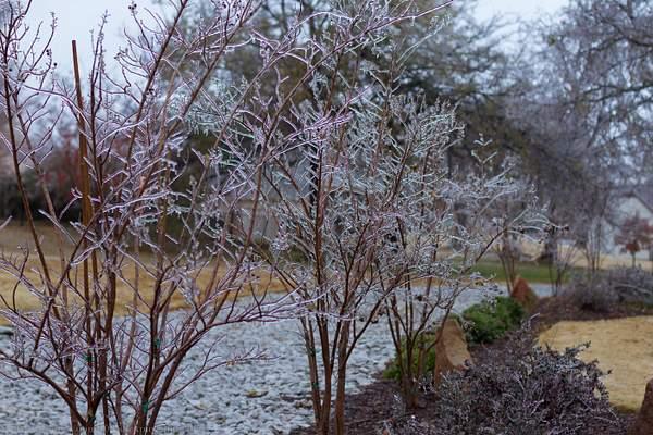 Frozen wonderland 058-12
