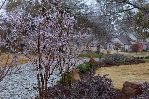Frozen wonderland 062-13