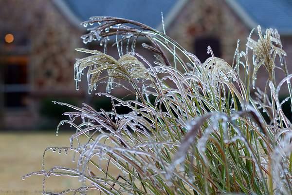 Frozen wonderland 052-11