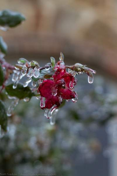 Frozen wonderland 027-7