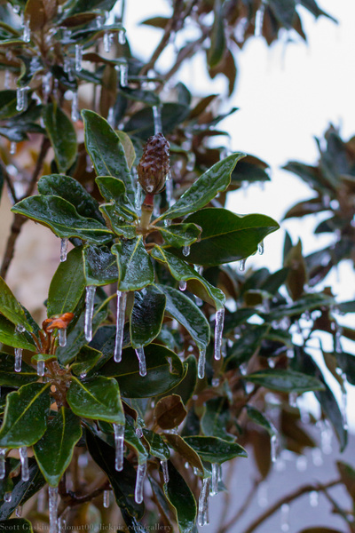 Texas Ice Storm by Donut00
