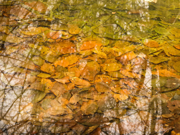 Leaves in a Pond (Feb 2013) by James Borland