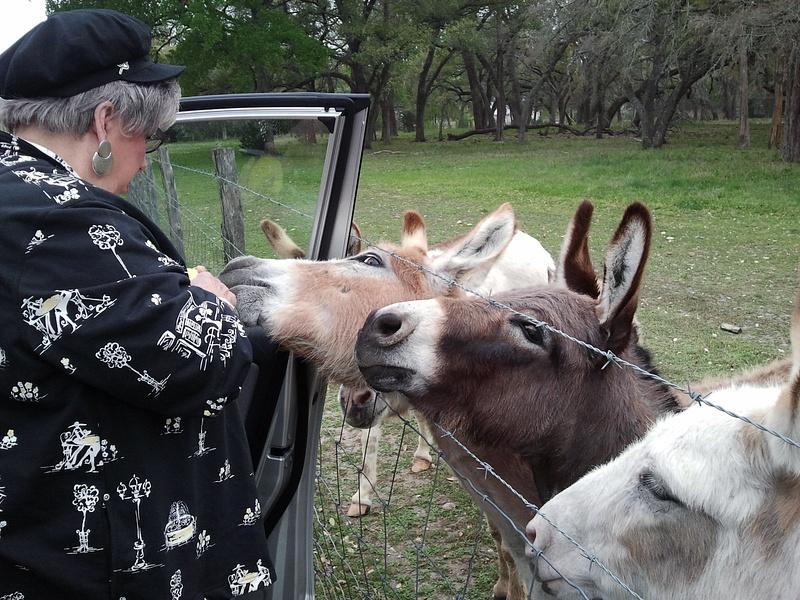 Somebody else's little donkeys.