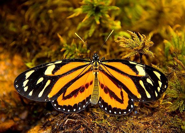 Butterfly. by AnatolyiZubkov