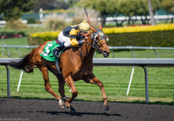 Horse Racing 9 by SBerzin