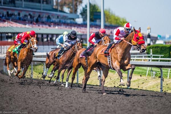 Horse Racing by SBerzin