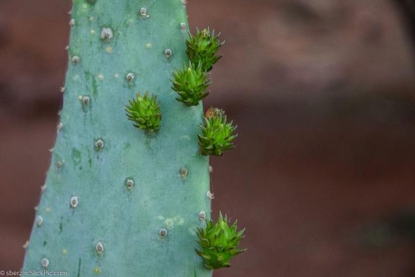 Cactus by SBerzin