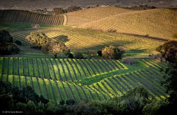 Vineyard by SBerzin