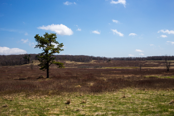 IMG_0607 by Simms65