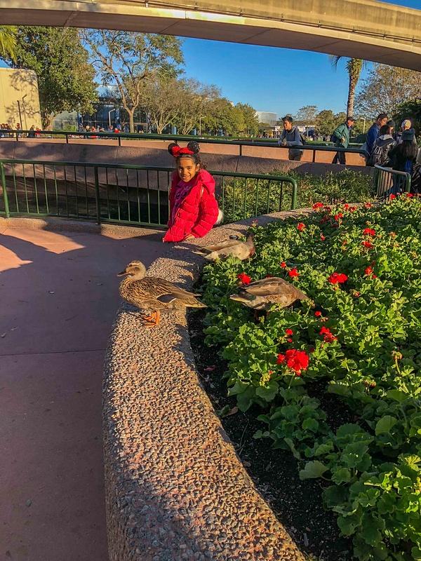 120-Disney 2017-IMG_5233