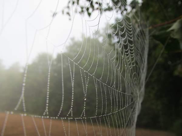Mgła w sieci
