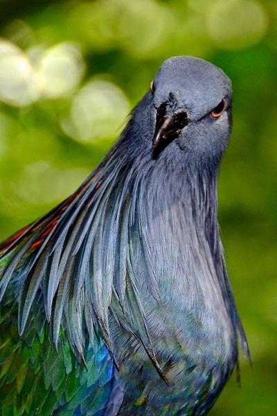 Jurong Bird Park 2013-05 by Roland Moser