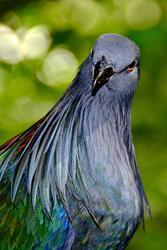 Jurong Bird Park 2013-05