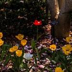 Toledo Botanical Garden May 2015