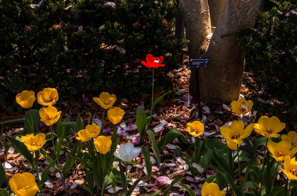 Toledo Botanical Garden May 2015 by SDNowakowski