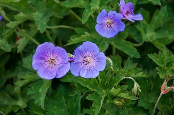 Mom's Flower Garden Summer of 2015 by SDNowakowski
