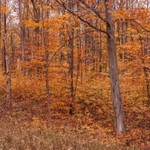 2015 Fall Colors on M-55 west of Cadillac, Michigan