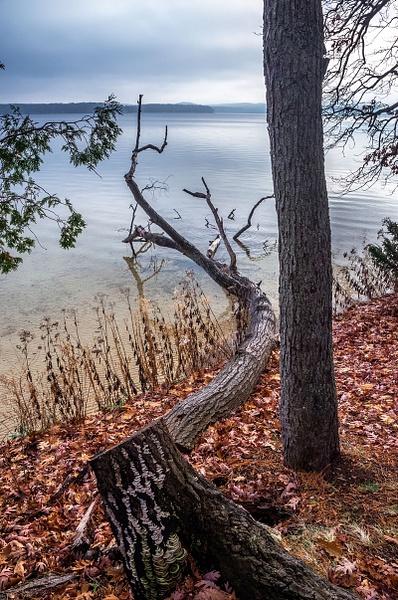 2015 Interlochen State Park in December by SDNowakowski