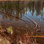 2016 Walton's Pond @ Walton's Junction in Northern Michigan