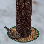 2017 Bird Feeders in Buckley, Michigan